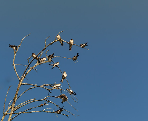 Oiseaux sur les branches des arbres pendant la journée
