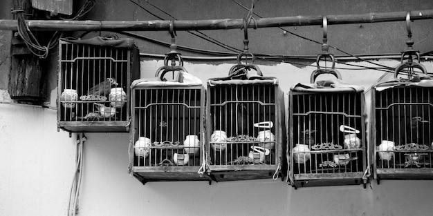 Oiseaux en cage, shanghai, chine