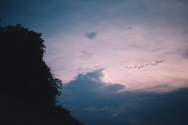 Oiseaux et ciel bleu le soir
