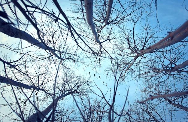 Les oiseaux dans le ciel suivent les lignes des arbres