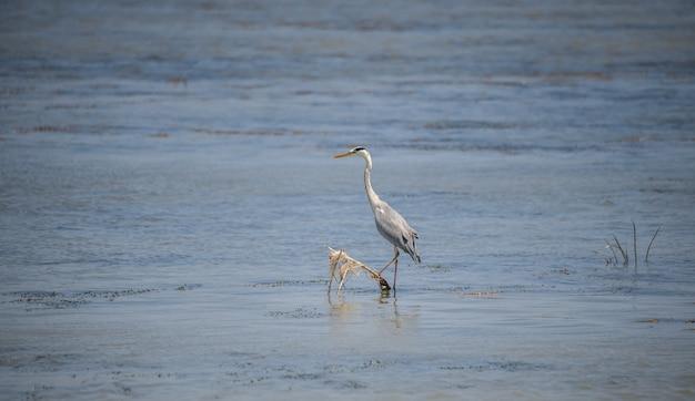 Oiseaux dans le delta du danube