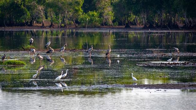 Oiseaux délicats dans le marais