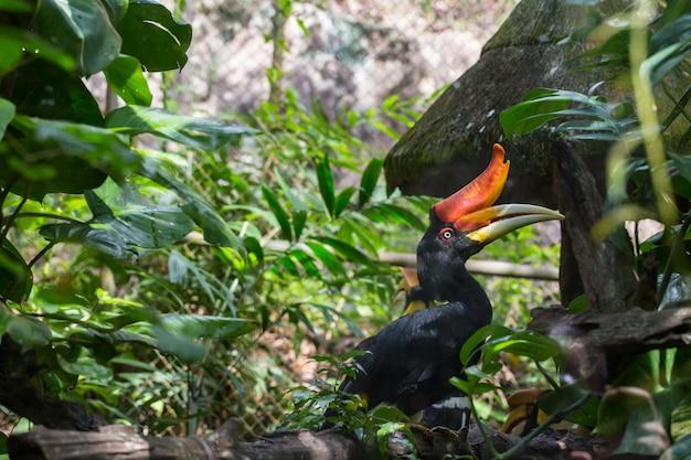 Oiseaux exposés au zoo