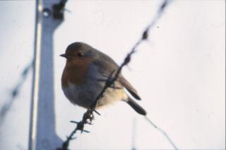Oiseaux, la graisse