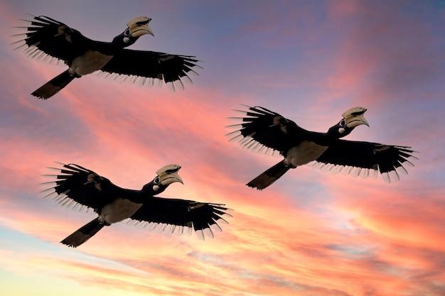 Oiseaux grand groupe de vol migrant au-dessus du lever du soleil et fond de ciel bleu