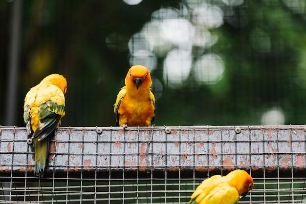 Oiseaux jaunes dans une enceinte
