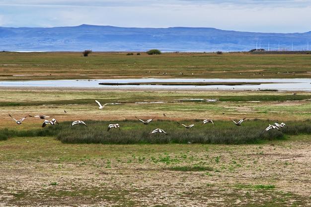 Oiseaux sur le lac argentino à el calafate patagonie argentine