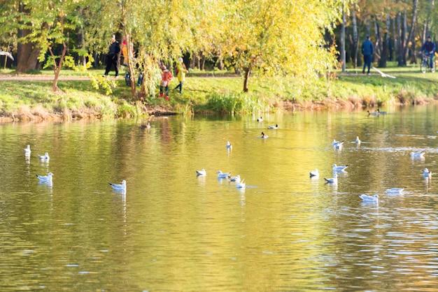 Oiseaux sur un lac dans le parc d'automne