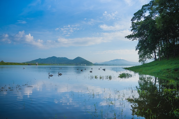 Oiseaux sur lac et montagne