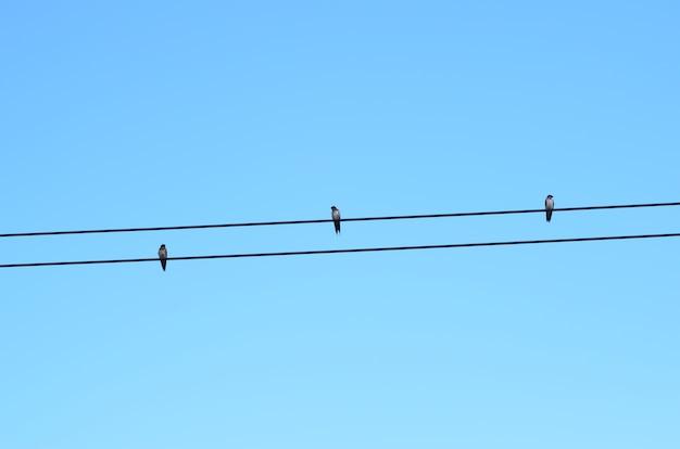 Oiseaux sur ligne électrique avec fond de ciel bleu