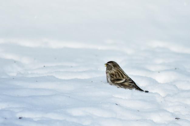 Les oiseaux mangent des graines dans le jardin en hiver