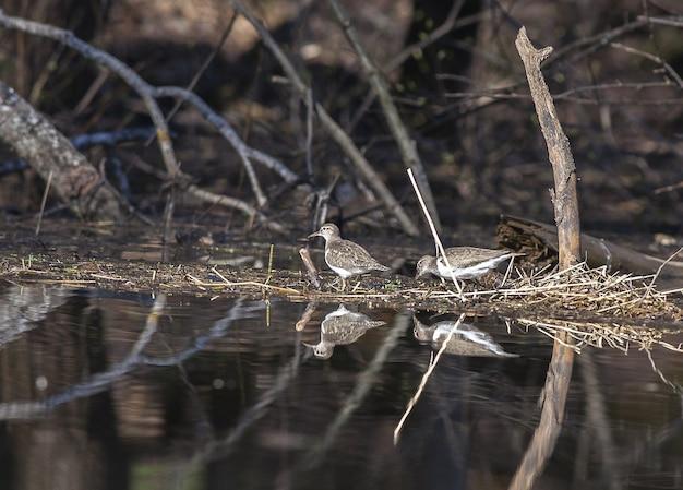 Les oiseaux marchent le long du rivage