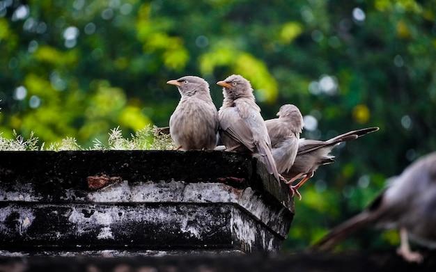 Oiseaux mignons sur l'arbre au tournage en plein air