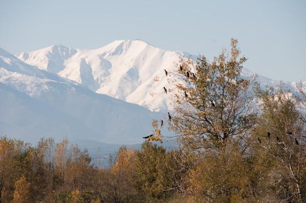 Oiseaux montagnes languedoc pays nature plafonné