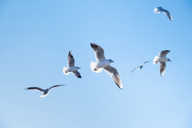 Les oiseaux des mouettes volent dans le ciel bleu
