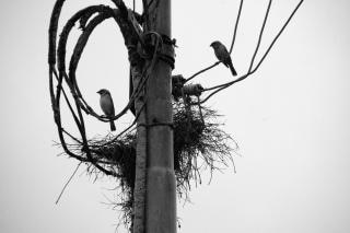 Les oiseaux et les nids
