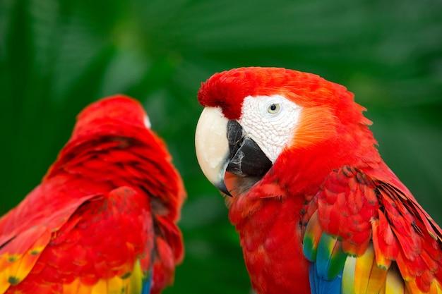 Oiseaux perroquets colorés