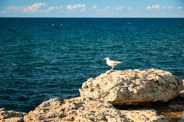 Oiseaux sur la plage dans la journée ensoleillée à la recherche de nourriture