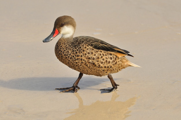 Oiseaux sur la plage des îles galapagos