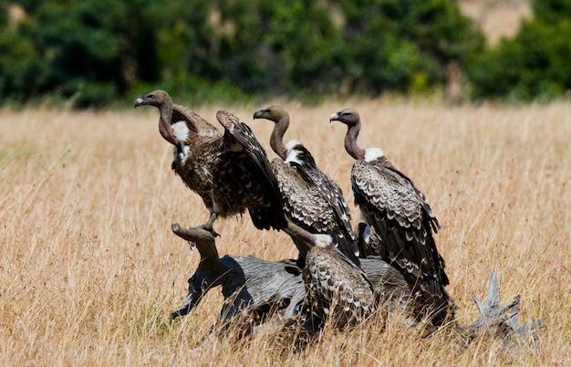 Les oiseaux prédateurs sont assis sur un arbre kenya tanzanie safari afrique de l'est