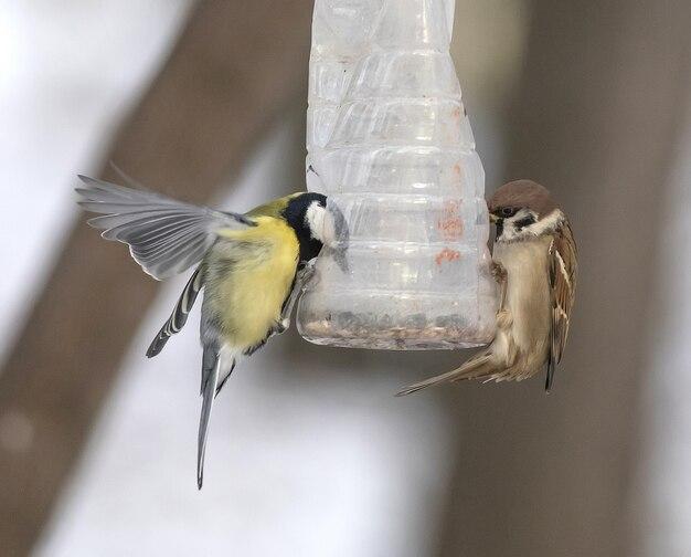 Oiseaux près de la mangeoire