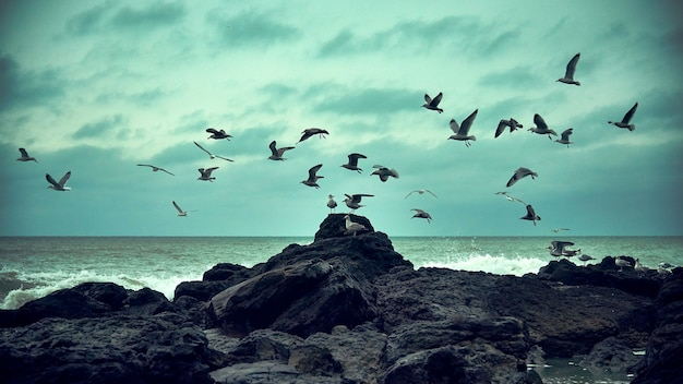Oiseaux qui volent
