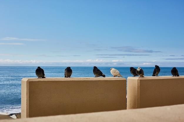 Les oiseaux sont froids au bord de la mer. les pigeons