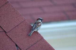 D'oiseaux sur le toit