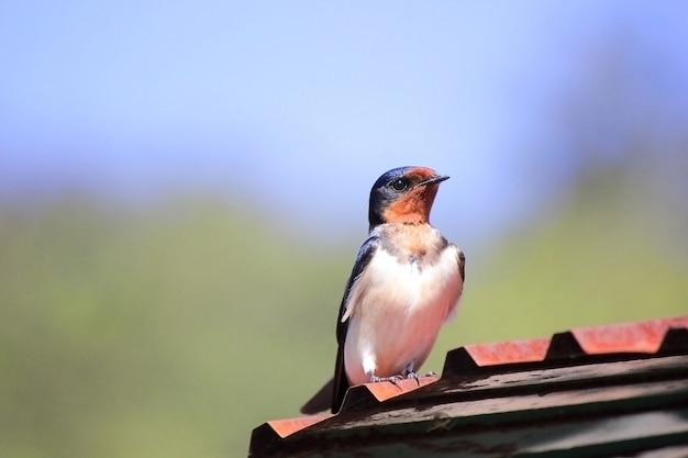 Oiseaux sur le toit