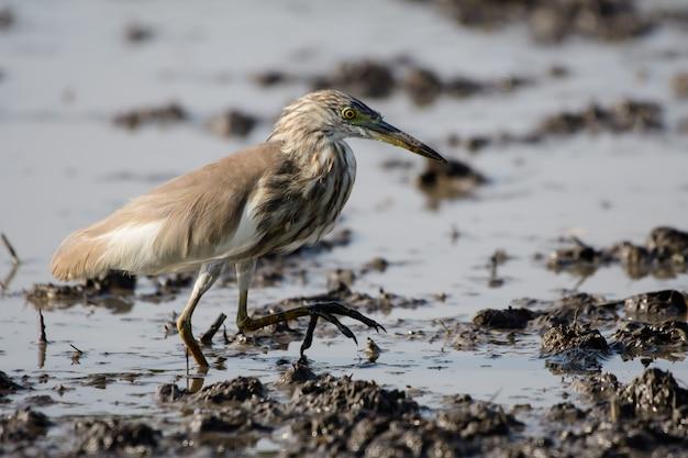 Les oiseaux utilisent des bouches longues et difficiles vivant dans le champ de l'eau