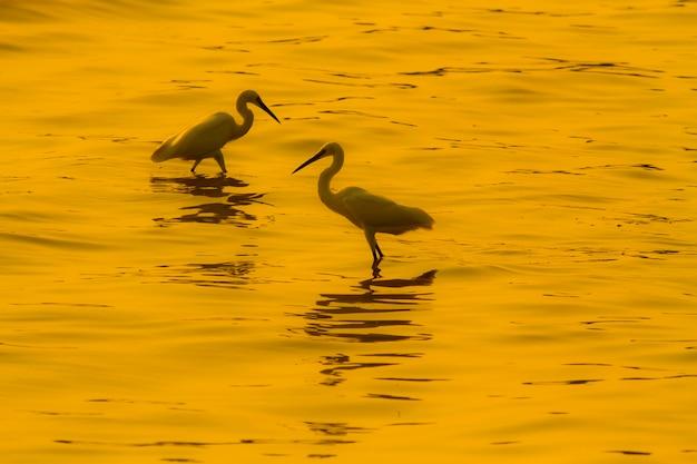 Oiseaux vivant dans la mer au coucher du soleil