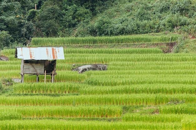 Old cottage et rizière en terrasses verte à chiang mai, thaïlande