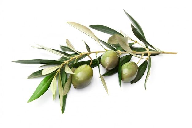 Olives sur branche avec feuilles