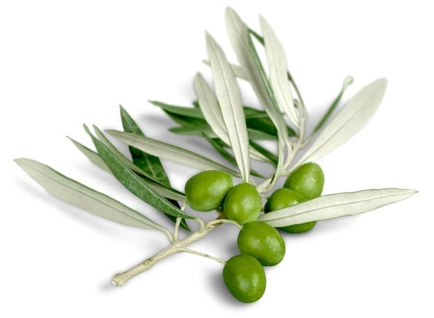 Olives sur branche d'olivier sur fond.