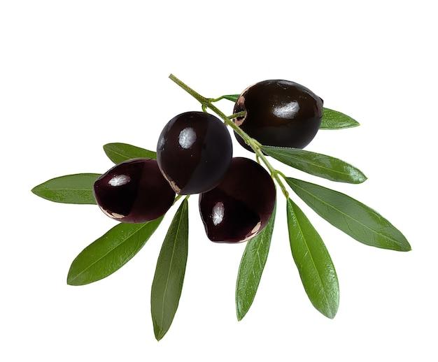 Olives noires sur une branche avec des feuilles