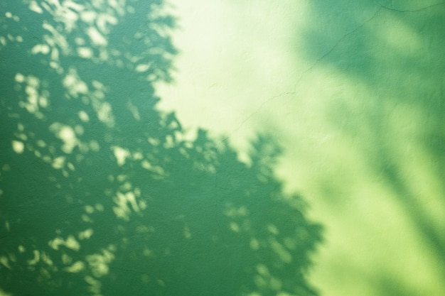 Ombre d'une branche d'arbre sur fond de mur végétalisé.