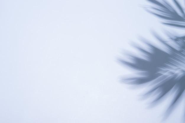 Ombre d'une branche d'un palmier sur une surface bleue