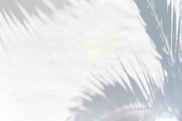 Ombre de congé de plam sur fond de mur de ciment blanc avec espace de copie