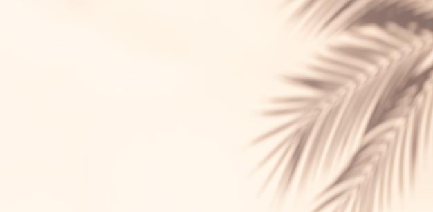 Ombre de feuille de palmier sur fond pastel. abstrait clair neutre de feuille de palmier ombres avec copie-espace.