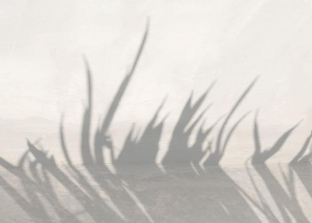 Ombre de feuille tropicale sur un effet de superposition de fond de ciment pour la conception d'art mural de maquette de photo