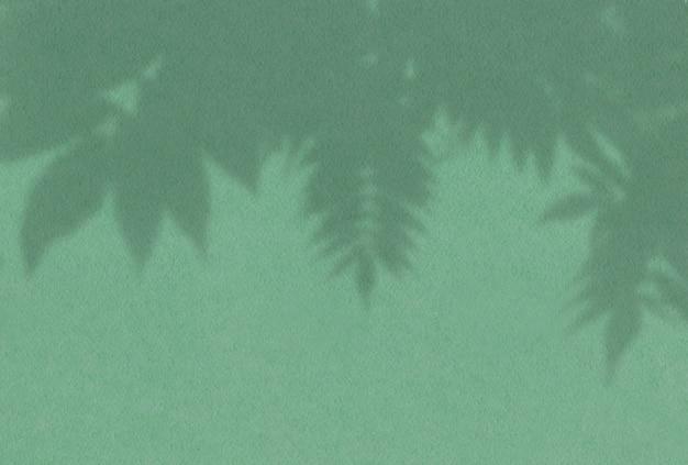 Ombre des feuilles d'une branche de rowan sur un mur vert