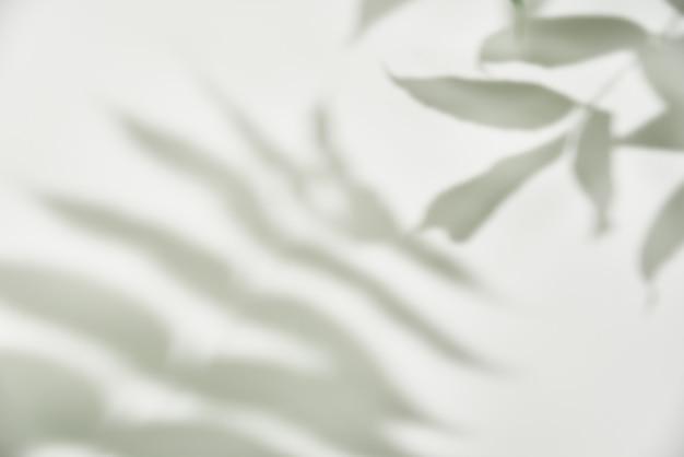 Ombre des feuilles sur fond blanc. abstrait créatif. modèle d'ombre de la nature