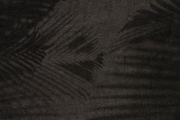 Ombre de feuilles sur fond noir