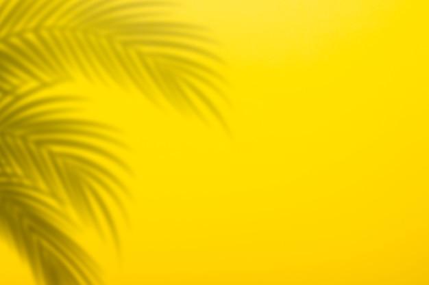 Ombre de feuilles de palmier sur fond d'un mur jaune. fond jaune, carton. image abstraite