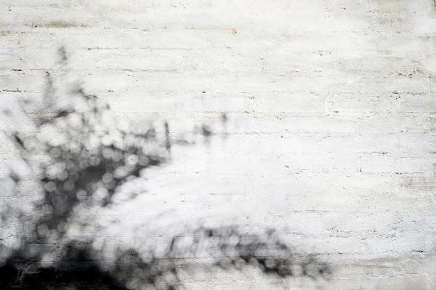 Ombre de feuilles de palmier naturel sur la texture du mur en béton gris et papier peint, ton noir et blanc
