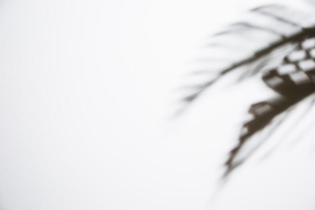 Ombre de feuilles sombres isolé sur fond blanc