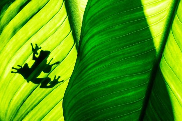 Ombre de grenouille sur fond de feuille verte naturelle, texture de feuillage tropical.