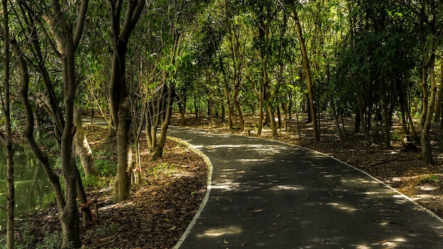 Ombre et lumière sur une petite route pour des activités dans le parc et le jardin botanique sri nakhon khuean khan, parc public du sous-district de bang kachao, samut prakan, thaïlande