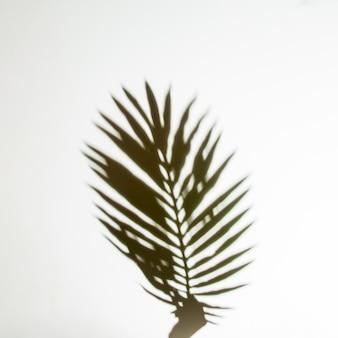 Ombre des mains tenant une feuille de palmier sur fond blanc