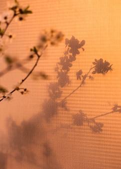 Ombre printemps fond cerise floraison branche naturel